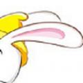 兔朵app